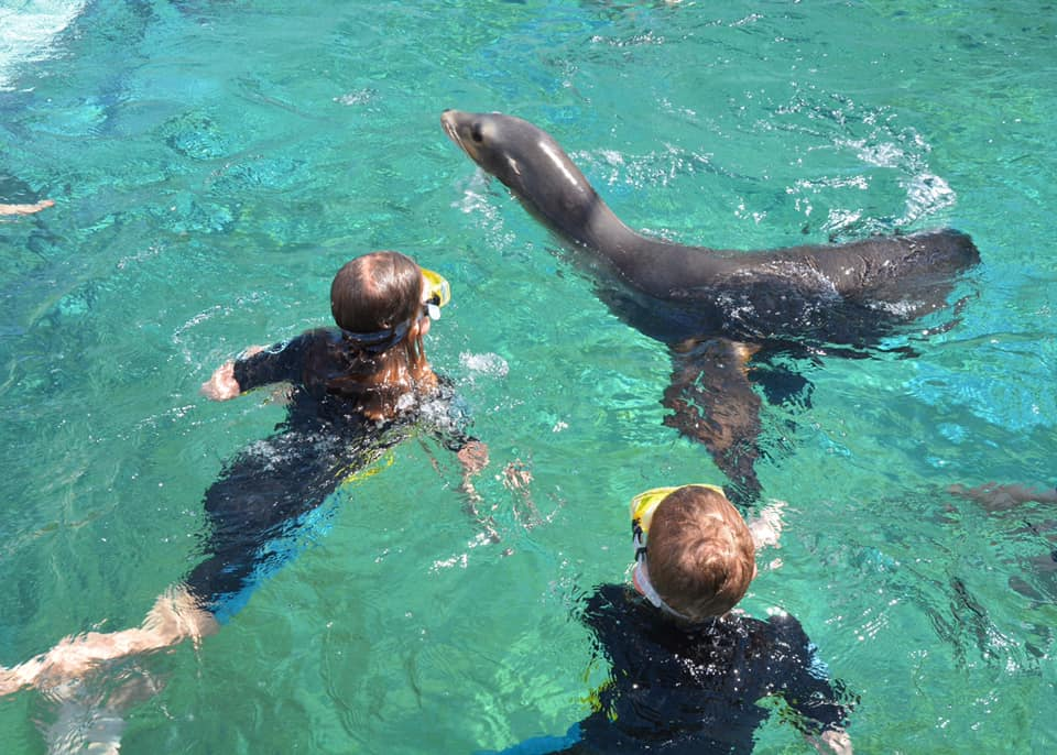 Sea lion Encounter at Atlantis Paradise Island Bahamas